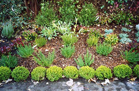 Planting Design ideas