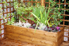 wooden raised plant beds
